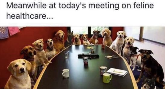 meanwhile at today's meeting on feline healthcare, all dogs