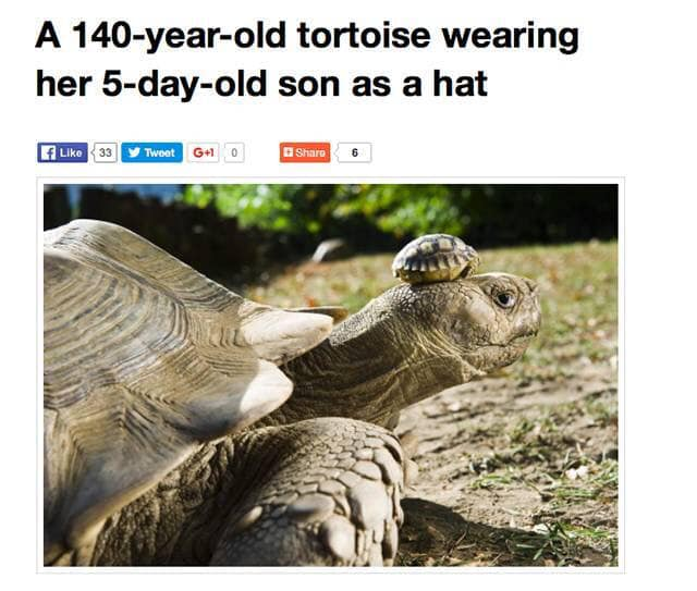a 140 year old tortoise wearing her 5 day old son as a hat