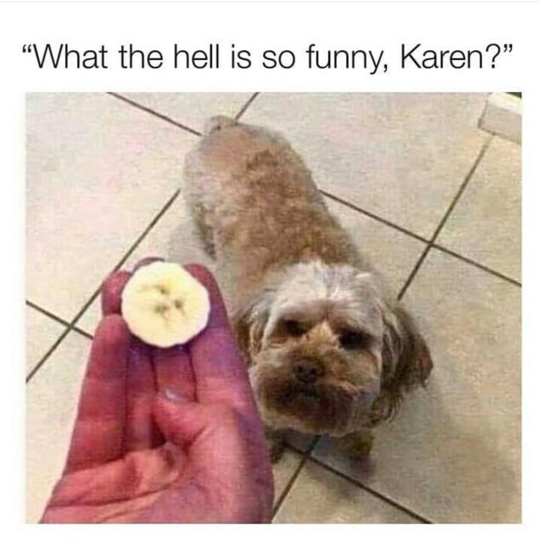 what the hell is so funny karen?, dog in banana