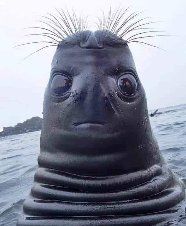 what this is, seal looking up