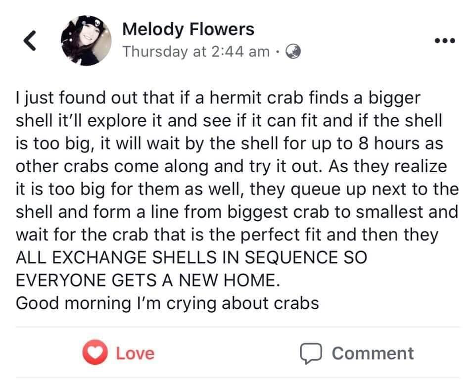 i just found out that if a hermit crab finds a bigger shell, it'll explore it and see if it can fit and if the shell is too big, it will wait by the shell for up to 8 hours as other crabs come along and try it out, they queue up