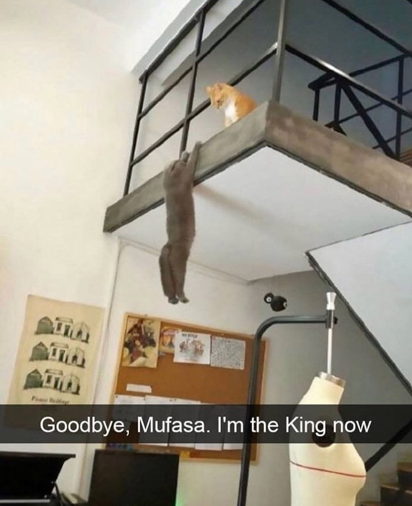 goodbye mufasa, i'm the king now