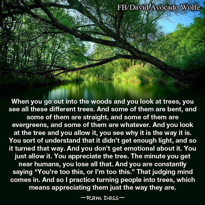 when you go out into the woods and you look at the trees, you see all these different tress, some are bent, some are straight, some are evergreens, you look at the tree and you allow it, just the way you are, appreciate