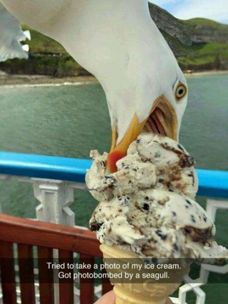 tried to take a photo of my ice cream, got photobombed by a seagull