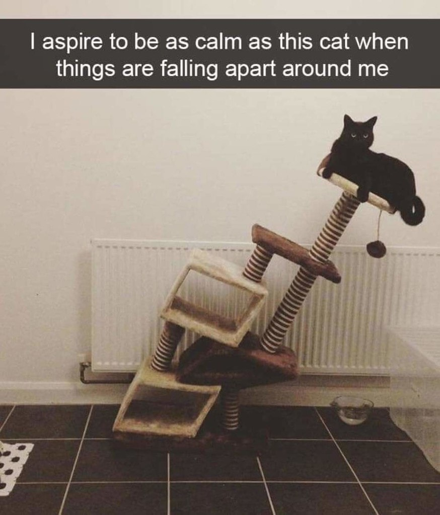 i aspire to be as calm as this cat when things are falling apart around me