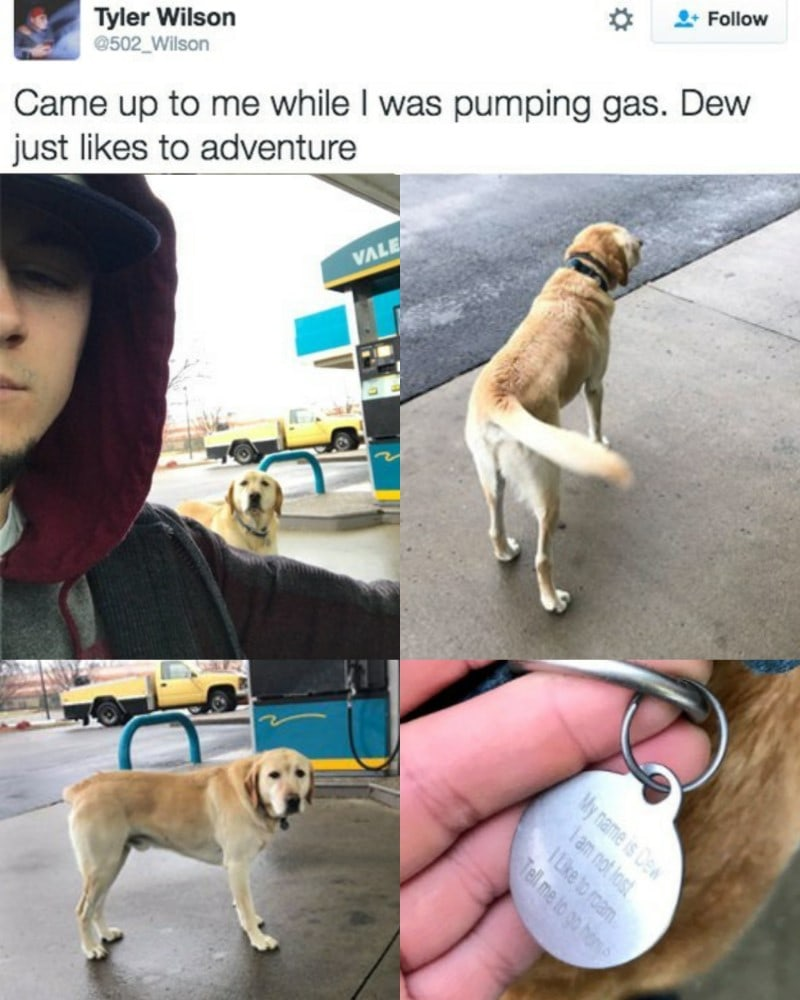 came up to me while i was pumping gas, dew just likes to adventure, my name is dev, i am not lost, i like to roam, tell me to go home