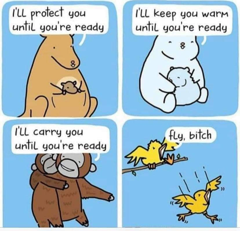i'll protect you until you're ready, i'll keep you warm until you're ready, i'll carry you until you're ready, fly bitch, comic, parenting in the wild kingdom