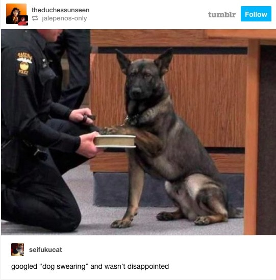 googled dog swearing and wasn't disappointed