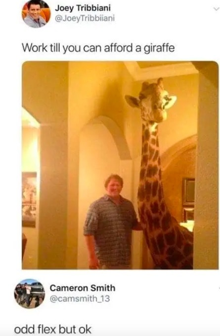 work till you can afford a giraffe, odd flex but ok, wtf