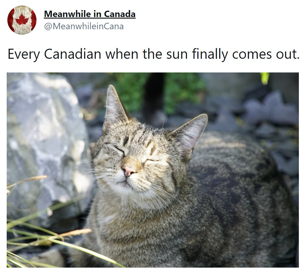 every canadian when the sun finally comes out, happy cat with face in sun